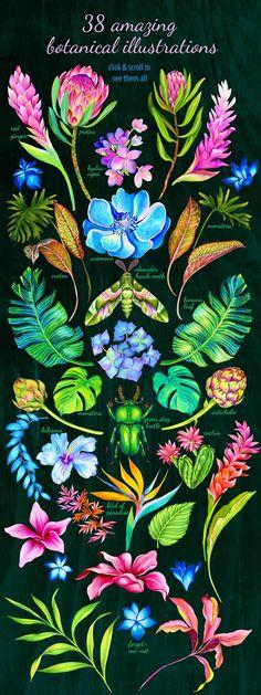 Amazing Botanic by RosaPompelmo on @creativemarket