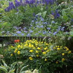 Blue and yellow  spring in woodland #gardenrooms