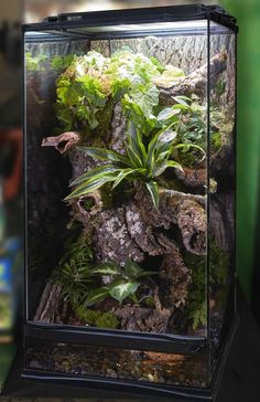 DIY this Zoo Med Skyscraper Terrarium by creating a zig zag pattern with cork rounds. Feed waterfall tubing through the rounds. Place extra Cork Rounds/ Cork Flats in a pattern to your liking, fill with dirt, and use as a planter.