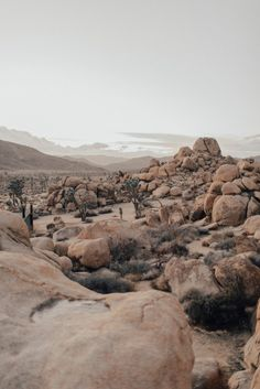 a muted palette - natalieallenco: Joshua Tree. Beautiful World, Beautiful Places, Desert Aesthetic, Nature Photography, Travel Photography, Portrait Photography, Nature Sauvage, Desert Dream, Le Far West