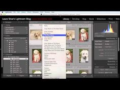 Find and Eliminate Duplicate Images in Lightroom | Laura Shoe's Lightroom Training, Tutorials and Tips