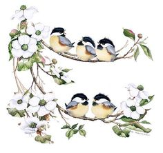 57 best images about valerie pfeiffer baby birds on . Watercolor Bird, Watercolor Animals, Watercolor Paintings, Bird Illustration, Watercolor Illustration, Illustrations, Bird Drawings, Cute Drawings, Chickadee Tattoo