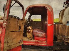 Mattie the Best Farm Dog Ever - Palouse, by Teri Lou