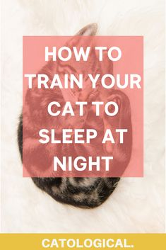 Curious about why your cat is up all night? Get yourself a good night's rest by understanding why cats are nocturnal and how to train your cat to sleep at night! #CatTraining #CatTips #CatFacts Cat Health Care, Cat Toilet Training, Cat Leash, Cat Info, Kitten Care, Cat Care Tips, Bad Cats, Outdoor Cats, Cat Behavior