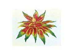 Amaranthus Poinsettia Mix  @Rohrer_Seeds www.RohrerSeeds.com