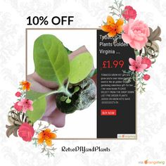 10% OFF on select products. Hurry, sale ending soon!  Check out our discounted products now: https://orangetwig.com/shops/AAB5v98/campaigns/AACeg99?cb=2016004&sn=RetroDIYandPlants&ch=pin&crid=AACeg20&utm_source=Pinterest&utm_medium=Orangetwig_Marketing&utm_campaign=SPRING_GARDEN_PLANTS