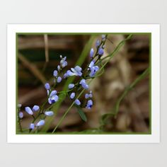 Forget Me Not (Olive) Art Print  #society6 #forgetmenot #flowers #nature #artprint