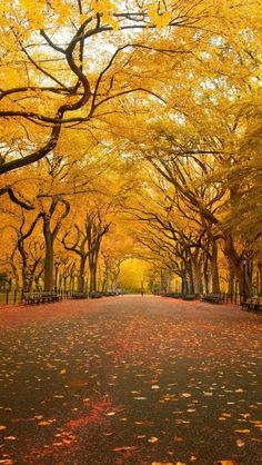 Fall in Central Park, NYC in love with this picture!