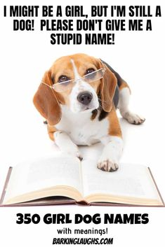 Female Dog Names And Meanings Beagle Funny Dog Memes Beagle Dog