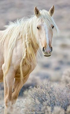 Beautiful white horse.                                                                                                                                                     More