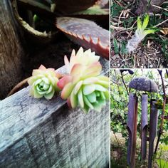 Plants detail