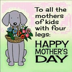 To all the mothers of kids with four legs.Happy Mother's Day cat mom mothers day dog mother quotes mom quotes happy mother's day mother's day mother greetings flowers for mother mother graphics. Happy Mothers Day Friend, Happy Mothers Day Pictures, Happy Mother Day Quotes, Mother Day Wishes, Happy Mother S Day, Mother Mother, Mother Quotes, Happy Quotes, Dog Quotes
