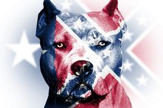 I don't know if i should put it on my pitbull or rebel flag board Southern Heritage, Southern Pride, Southern Girls, Southern Style, Southern Comfort, Bully Dog, Flag Background, Confederate Flag, Pit Bull Love