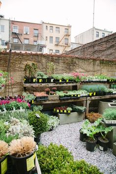a visit to GRDN in Brooklyn, New York (a specialty garden and home store for the urban gardener) | Ilenia Martini, SFGirlByBay