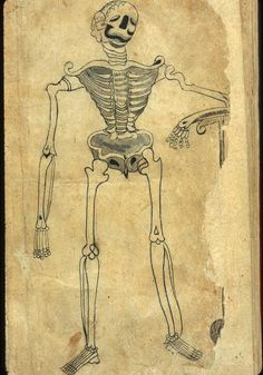 A drawing in ink and light-gray wash of a skeleton leaning on a pedestal. One of six leaves of anatomical drawings appended to a Persian translation of an Arabic medical compendium. Anonymous Persian Anatomical Illustrations, Muhammad Akbar. Undated and unsigned, probably 18th-century, India.