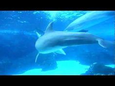 Dolphin sex [Bravehrt77 21 Jun 2012]