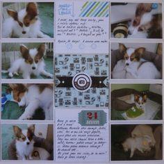 Můj papírový relax: Project life 13 - right page Project Life, Corgi, Relax, Projects, Animals, Log Projects, Corgis, Blue Prints, Animales