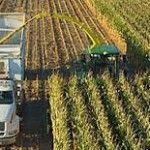 Does chopping corn for silage, because it is too poor for leaving for grain, mean farmers taking a hit in the wallet?Not necessarily. Which is one reason why many analysts have a beef with US Department of Agriculture crop estimates.