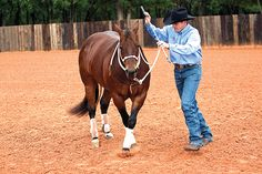Clinton-Anderson-Groundwork-one yielding the forequarters Clinton-Anderson-Groundwork-One liefert das Vorderviertel Clinton Anderson, Horses And Dogs, Show Horses, Horse Riding Tips, Horse Tips, Western Horsemanship, Natural Horsemanship, Horse Training, Training Tips