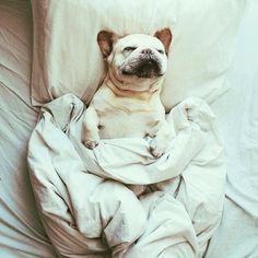 doggy sleep
