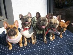 this is so the frenchie family i want