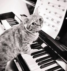 Nothing but Kitty CATS... Bonus I love piano too... Not as much as I love kitty cats
