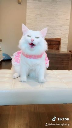 Funny Animal Videos, Funny Animals, Cute Animals, Getting Old, Cats And Kittens, Cute Cats, Dog Cat, Rock, Sweet