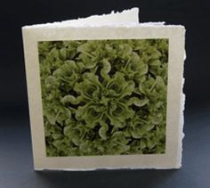 Unique greetings card design for birthdays or Father's day. Card without a specific written message. This beautiful photograph of a lettuce by photographer Jonathan Leach is mounted on handmade Indian paper and comes complete with a handmade paper envelope. All profits from this card sale goes to support the charity lepra.  Price £3.50 P&P included.