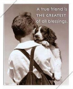 A true friend is the greatest of all blessings. Springer Spaniel Dog and Boy