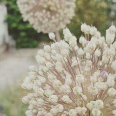 Pompones florales