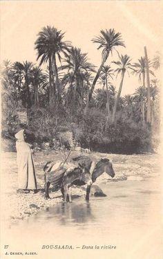 Desert Oasis, Gaia, Middle East, Old Photos, Egypt, Science, Culture, Sun, Wallpaper