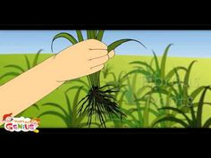 Parts of Plant -Lesson 1 -Kids-www.makemegenius.com-One of the Best Indian Education website