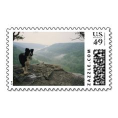 A border collie stands on a bluff, Tennessee Stamps. Make your own business card with this great design. All you need is to add your info to this template. Click the image to try it out!