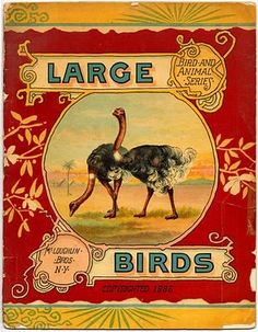 Large Birds...