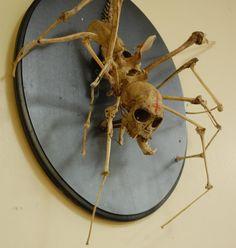 spider skeleton: creepy taxidermy art, spider monkey articulated mount. $3,000.00, via Etsy.