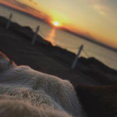 #湘南  #藤沢  #江ノ島  #鵠沼海岸 #富士山 #shonansnap  #ワッパー越しの #sunset #今日も #安定の美しさ