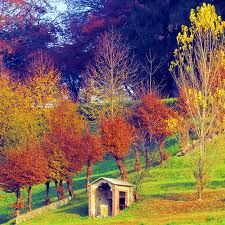 warm colours of nature.