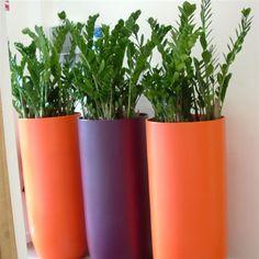 plants decor - Buscar con Google