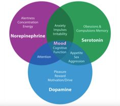 mood disorder neurotransmitters.png 304×270 pixels