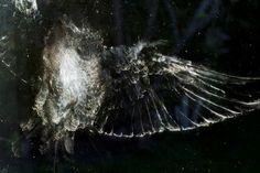 Traces laissées par des oiseaux qui heurtent des vitres - La boite verte