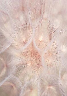 Looks very magical (Dandelions)