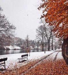 Tra autunno ed inverno.. - photo by @marigio_ #torino #winter #autumn