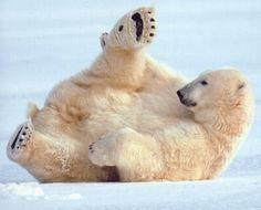 Schutz der Eisbären | http://polarbears.npage.de/eisbaeren.html Mehr