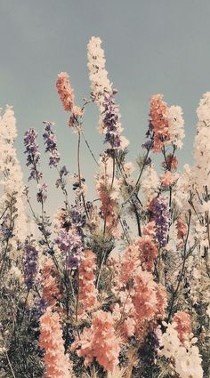 flowerbed 『edited by me 』 in 2020 | Aesthetic backgrounds, Nature aesthetic, Flower aesthetic