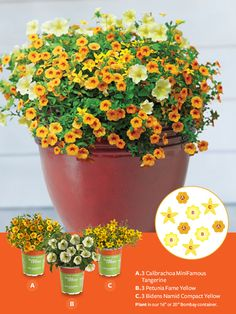 "Container Gardens made easy! For a sunny, summery look, plant the following in our 16"" or 20"" Bombay container: A. 3 Calibrachoa MiniFamous Tangerine B. 3 Petunia Fame Yellow C. 3 Bidens Namid Compact Yellow"