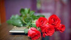 48 Gambar Mawar Merah Terbaik Backgrounds Phone Wallpapers Dan