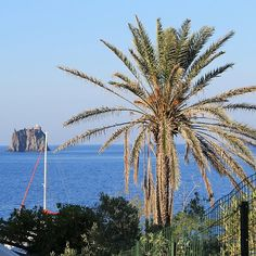 A #palm #tree, that's all we need in life ! #Stromboli, #Sicily http://flic.kr/p/fk7dZr - Patrick #Nouhailler