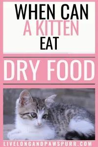 When Can A Kitten Eat Dry Food Live Long And Pawspurr In 2020 Cat Training Cat Training Tricks Kittens