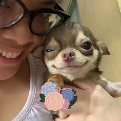 Cute Dresses, Tops, Shoes & Clothing for Women Teacup Chihuahua, Chihuahua Puppies, Chihuahua Facts, Cute Funny Animals, Cute Baby Animals, I Love Dogs, Cute Dogs, Cute Dog Photos, Puppy Face