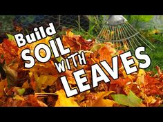 Nature Builds Soil This Way 🍂 🍁 So Should You! 🍂 🍁 - YouTube
